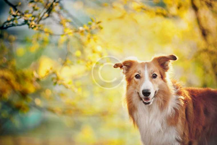 """Why Pro Dog Walkers Don't Recommend """"Choke"""" Dog Collars"""