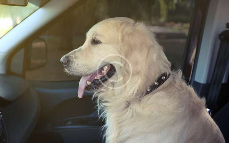Don't Leave Your Pets in a Parked Car