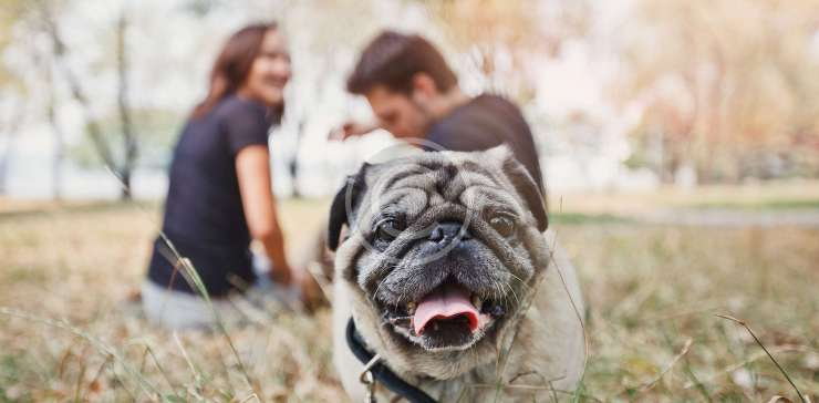 Professional Dog Walkers' Guide to Shampoo