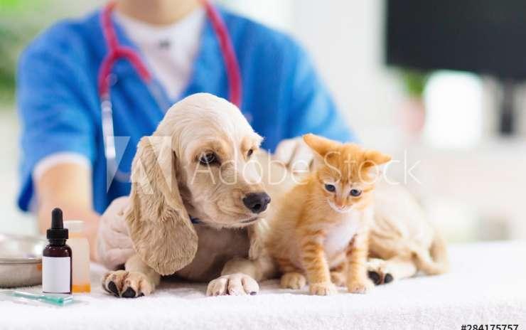Antiparassitari chimici: sono l'unica soluzione per proteggere i nostri animali?