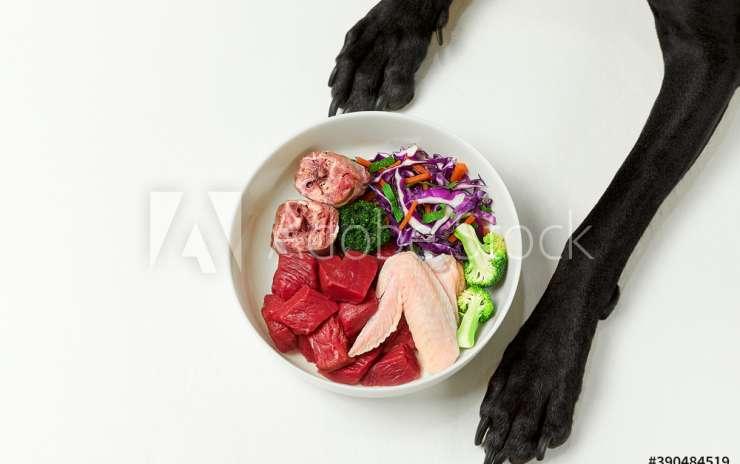 Il pasto: alcune riflessioni sulla corretta alimentazione del cane
