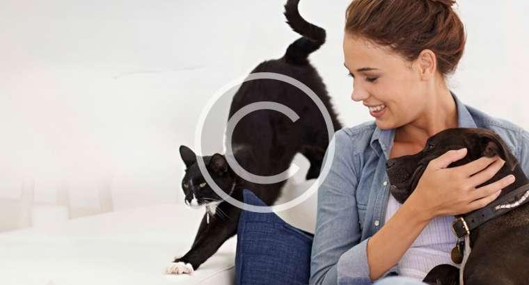 Bismuthum : aiuto nelle sindromi gastroenteriche del cane e del gatto.